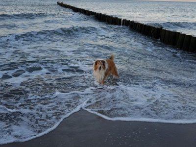Urlaub mit Hund in Rerik